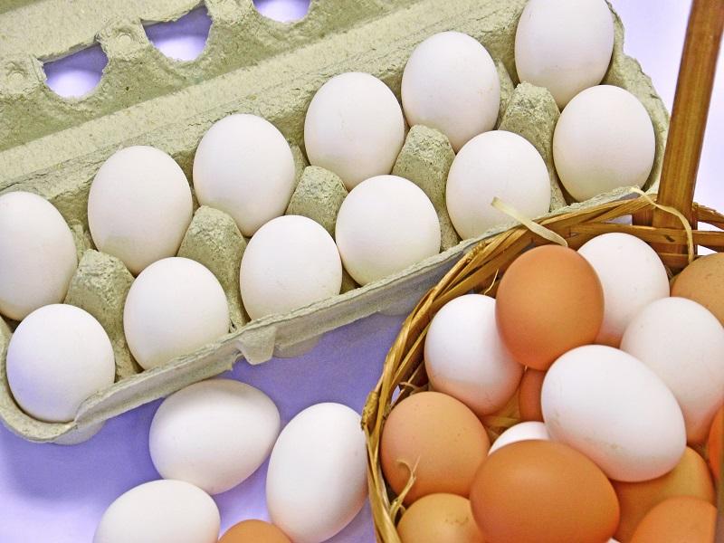 ovos foto embrapa