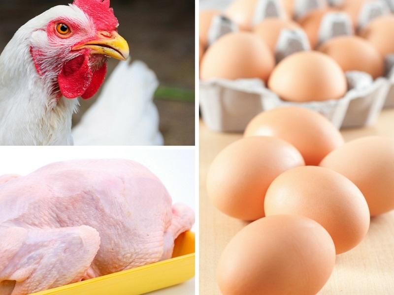 frango e ovos