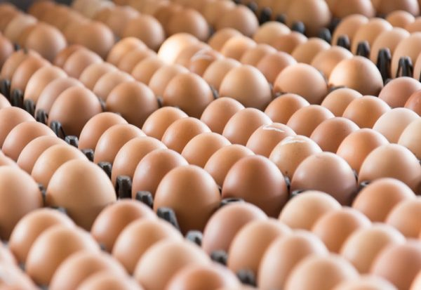 Eggs from chicken farm in the package that preserved for sale